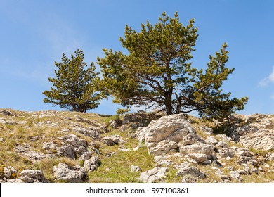 Lonely pine on top among a pile of stones. Krumsy landscape among the reserve of the mountainous Crimea somewhere in the distance from the cities