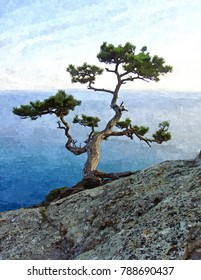 Lonely Pine Tree on the cliff near the sea. landscape with a lonely tree on the sea. Big green pine tree on the seaside cliff. Summer landscape