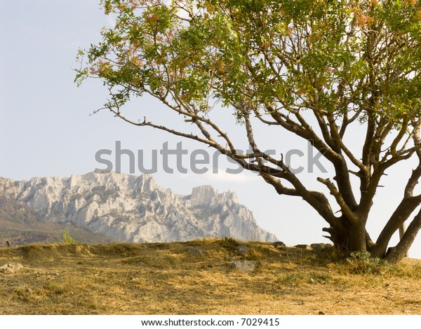 Lonely pistachio tree on a background of the sky and mountains