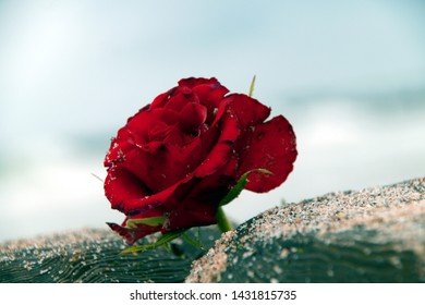 Sad Rose Images Stock Photos Vectors Shutterstock
