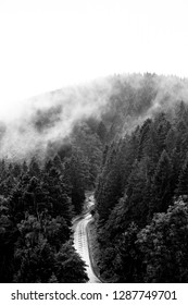 Lonely road leads through a dense Foggy forest, view from above, Portrait