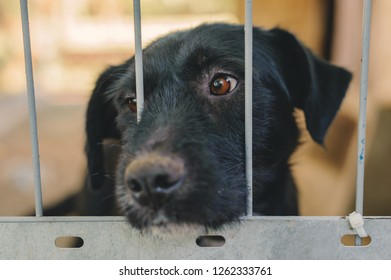 Lonely sad black dog waiting for its new keepet and hopefully looking out from its kennel