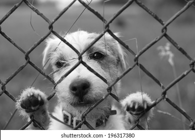 A lonely sad dog behind wire fence, lost freedom, black and white