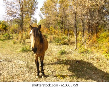 Lonely sad horse in autumn