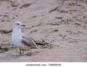 Lonely seagull on the beach. Taken in Myrtle Beach, South Carolina