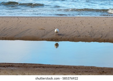 Lonely seagull staying on the sea beach