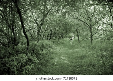 Lonely senior woman walking in a Danish forest at springtime.