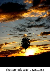 lonely silhouette tree in evening orange sky