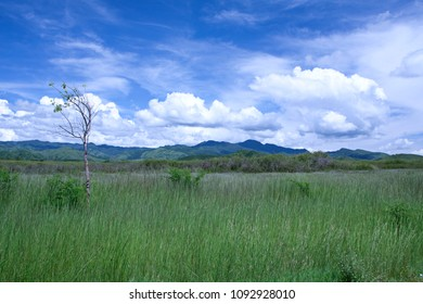 Lonely small tree growing in field on outskirts of Trinidad, Cuba.