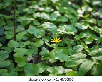 A lonely small yellow flower among green leaves and a creeping spider on a web
