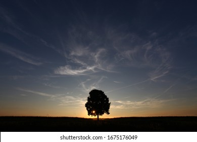A lonely solitary tree infront of the setting sun at dusk sunset.