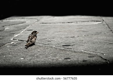 Lonely sparrow sitting on pavement