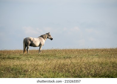 Lonely spotted horse on late summer meadow and blue sky background