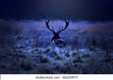 Lonely stag walking alone on field by the forest at night.