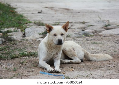 The lonely stray dog