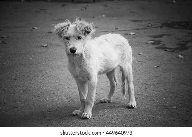 Lonely stray dog looking straight into the camera (in black and white, retro style)