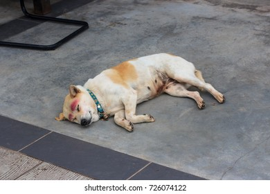 lonely stray dog sleeping on the street
