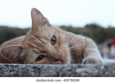 Lonely stray-cat close-up portrait