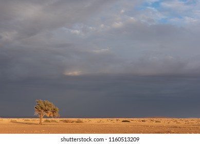 Lonely sun lit tree with dramatic dark and stormy cloud background