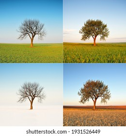 Lonely Tree - 4 seasons - spring summer autumn winter