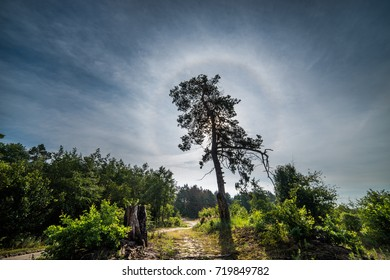 A lonely tree against a blue sky.A solar halo, a rainbow, a glow, a silhouette.