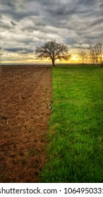 Lonely tree in the agricultural fields in sping sunset