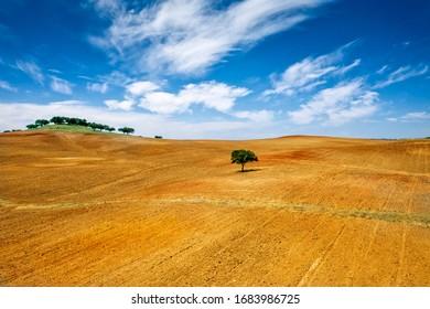 Lonely tree at alentejo, Portugal