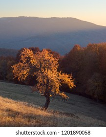 Lonely tree in autumn Carpathians