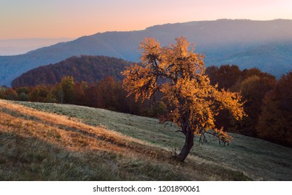 Lonely tree in autumn mountains
