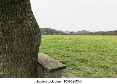 lonely tree with a bench