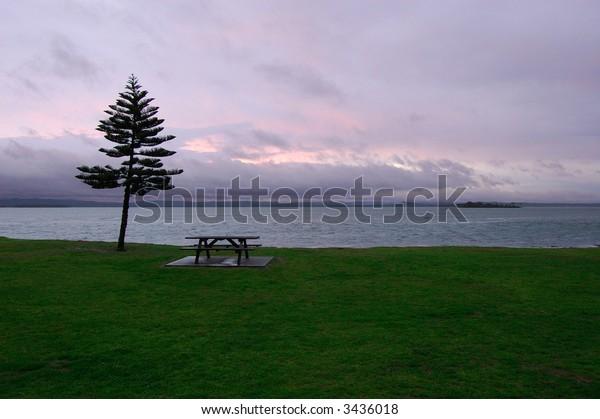 Lonely tree and a bench near a Tiggerah lake