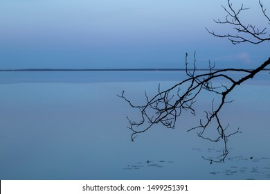 a lonely tree branch above the water. loneliness. calmness. strength. blue background. screen saver. blue water. sadness concept. relaxation. lonely tree. computer screen saver