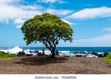 Lonely tree with buoys on Keanae Point, Maui