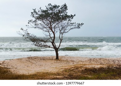 lonely tree by the sea, stormy weather by the sea