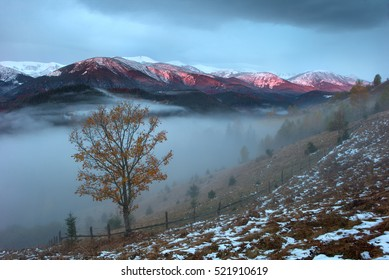 Lonely tree in the Carpathian Mountains. covered with the first snow in the autumn