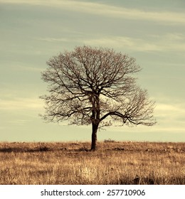 lonely tree in the desert against the sky