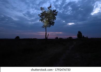 Lonely tree in Dwingelderveld, The Netherlands