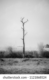 lonely tree in field in infrared film concept