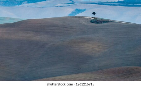Lonely tree in the field. Tuscany, Italy.