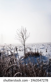 Lonely tree in the fields on a cold foggy winter day