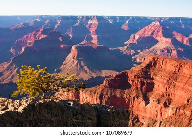 Lonely Tree in Grand Canyon National Park