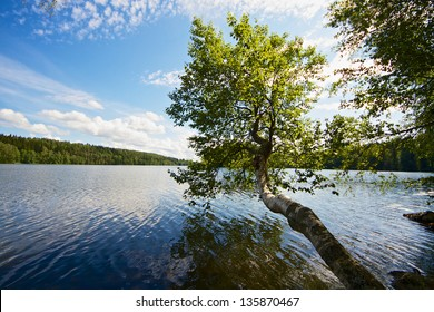 Lonely tree growing away from the land and above the lake on beautiful summer day in Finland