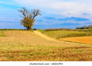 Lonely tree growing on a field by a dirt road, blue sky with clouds in a background