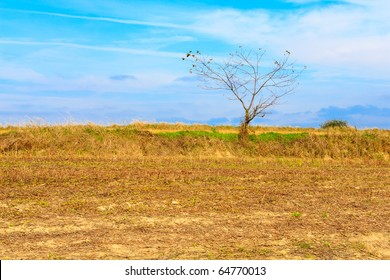Lonely tree growing on a field, blue sky with clouds in a background