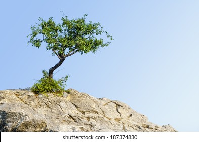 Lonely tree growing on top of the rock.
