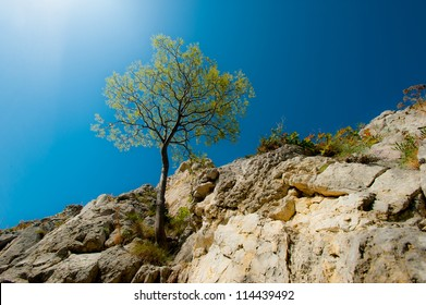 Lonely tree hanging from rocks in the mountains, isolated on clear background