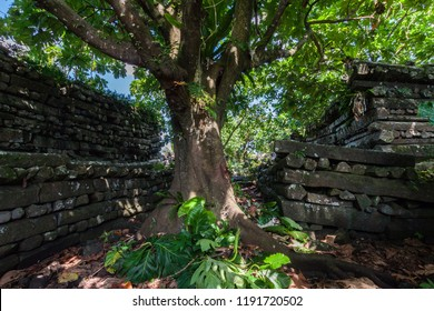 A Lonely tree inside Nan Madol central Nandauwas part: walls, and moat made of large basalt slabs, overgrown ruins in the jungle, Pohnpei, Micronesia, Oceania