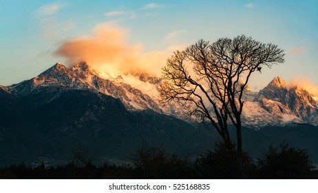 The lonely tree and the Jade Dragon Snow Mountain