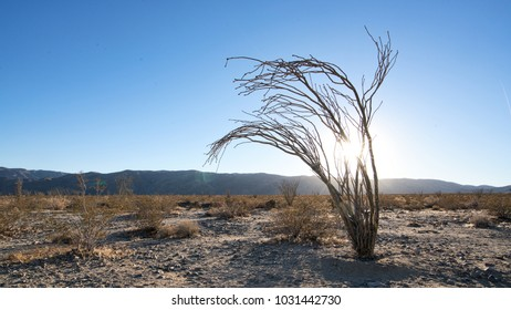 Lonely tree in Joshua Tree National Park