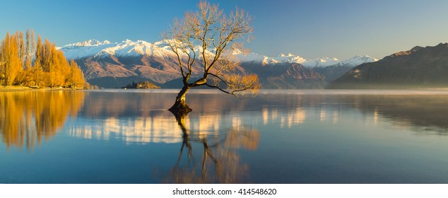 The Lonely tree of Lake Wanaka, South Island, New Zealand, at the morning light and the snow clad Remarkables at the Backdrop ..
